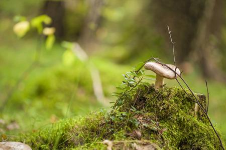 fungi: autumnal foraging background with fungi