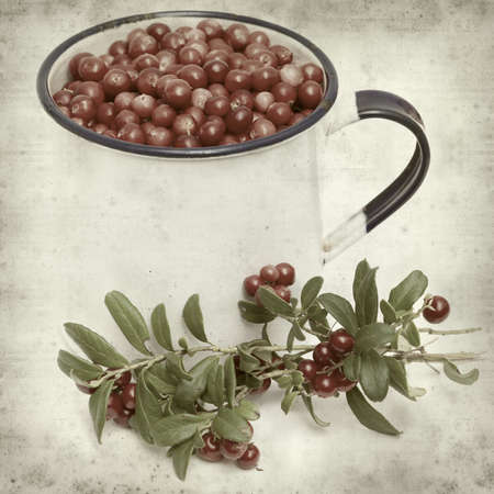 picked: textured old paper background with freshly picked lingonberry