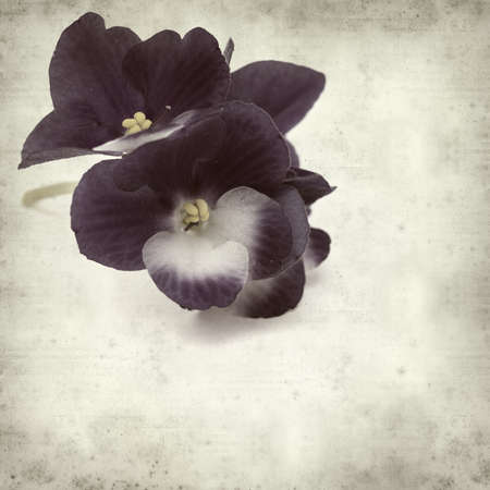 floral grunge: textured old paper background with blue and white african violet Stock Photo