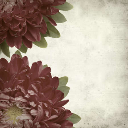 aster flowers: textured old paper background with dark pink aster flowers