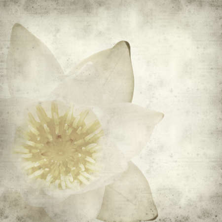 pygmy: textured old paper background with white waterlily flower Stock Photo