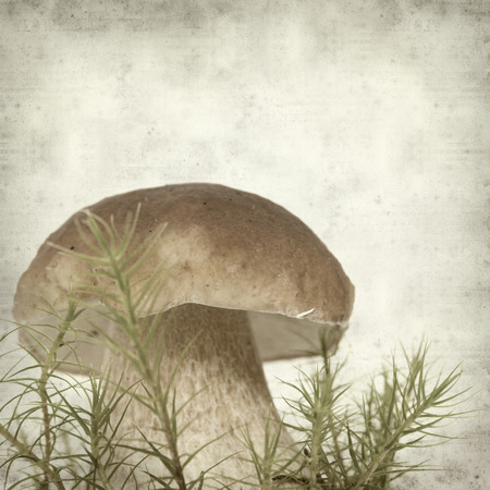 edulis: textured old paper background with boletus edulis mushroom