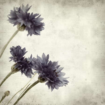 floral grunge: textured old paper background with blue cornflower Stock Photo