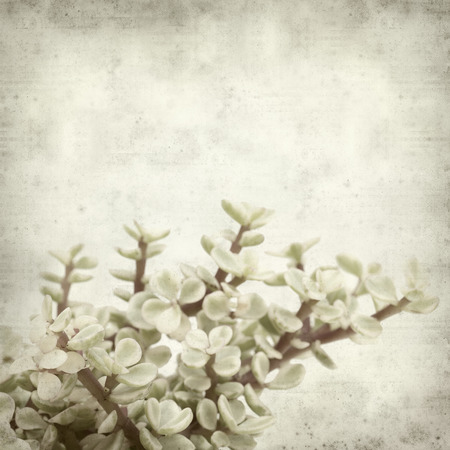 textured old paper background with Portulacaria afra succulent plant Stock Photo