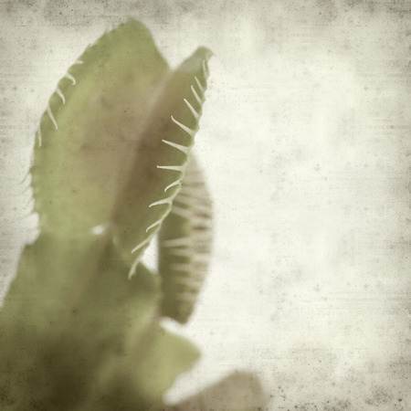 venus: textured old paper background with Venus flytrap plant leaves