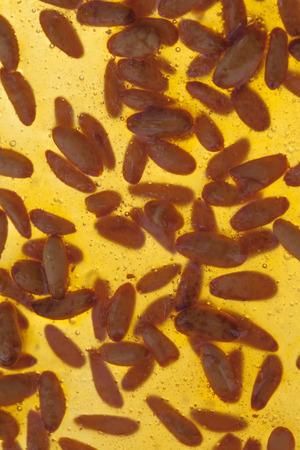 pinoli: torrone Brown o nougatine con intere pinoli tostati