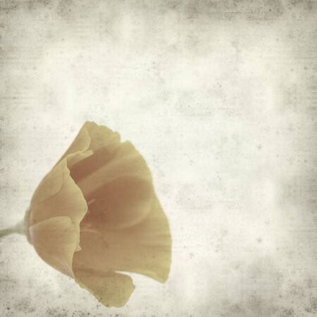 californian: textured old paper background with orange and yellow californian poppy