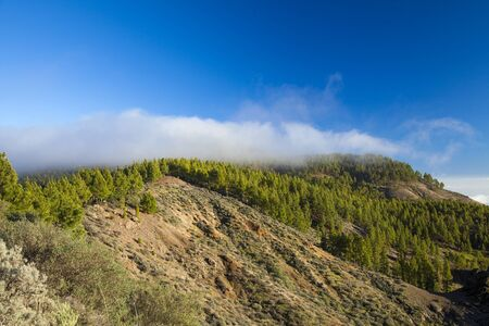 Central Gran Canaria in December, low evening light over the mountains, Canarian pine trees,  low clouds Stock Photo