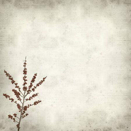 textured paper: textured old paper background with winterberry branches