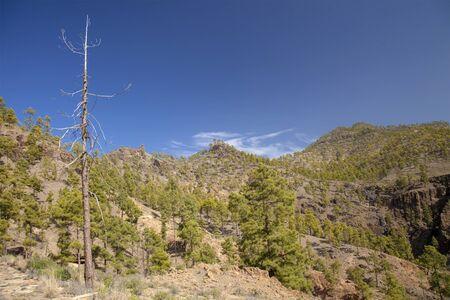 bartolome: Central Gran Canaria, natural park Pilancones in  San Bartolome de Tirajana municipality