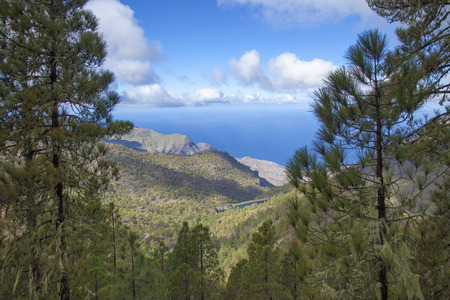 central Gran Canaria in January,  Nature Park Tamadaba, pine trees on the slopes