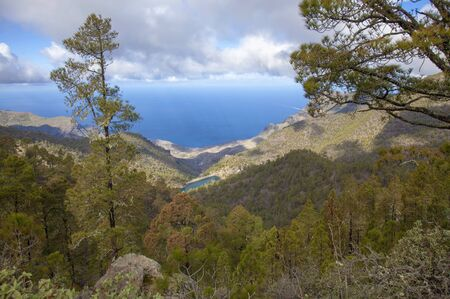 central Gran Canaria in January,  Nature Park Tamadaba, pine trees covered in long lichens Stock Photo