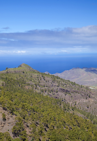 West Gran Canaria in February, hiking path through old pine forest around Integral Nature Reserve Inagua