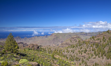 steep: West Gran Canaria in February, hiking path through old pine forest around Integral Nature Reserve Inagua, Teide on Tenerife visible in far distance