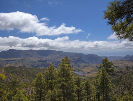 Central Gran Canaria, protected area of Integral Nature Reserve Inagua, pine forest
