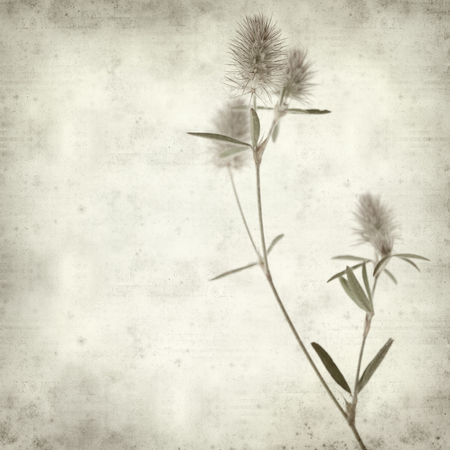 trifolium: textured old paper background with hare foot clover Stock Photo