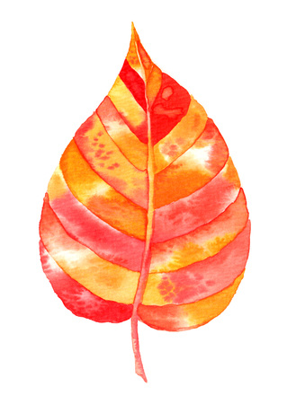 watercolor autumn leaf isolated on white background Stok Fotoğraf