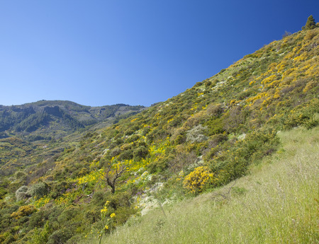 Central Gran Canaria in April, abundat spring flowering