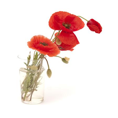 흰색 배경에 고립 된 밝은 빨간 양 귀 비 꽃