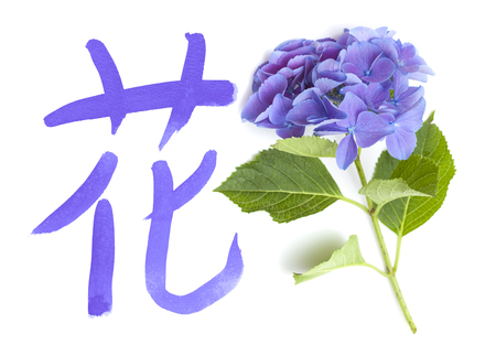 Chinese or Japanese symbol for flower, color ink calligraphy on white, with hydrangea petals Stock Photo