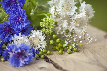 linum: northern summery bouquet of cornflowers and flax capsules Stock Photo