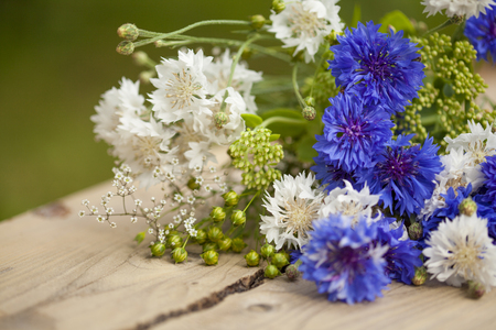 linseed: northern summery bouquet of cornflowers and flax capsules Stock Photo