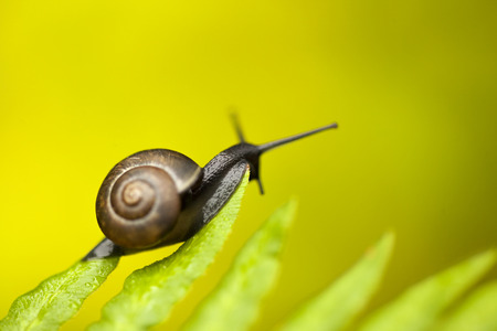 Natural macro summery background with fern leaf and a small black snail