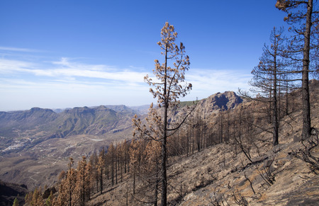 Gran Canaria after wild  fire, October 2017, Las Cumbres, view into Tirajana valley