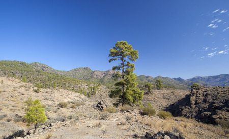 Gran Canaria, November, approaches of Tauro mountain range in the south of the  island Stock Photo