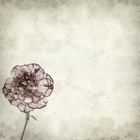 textured old paper background with variegated carnation flower Stock Photo
