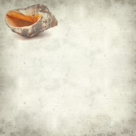 textured old paper background with sea snail shell