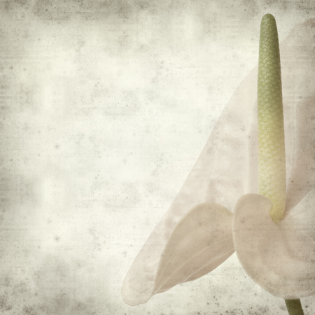 textured old paper background with pink Anthurium flower