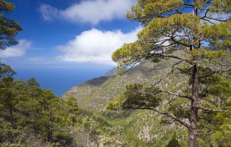 Gran Canaria, March, Tamadaba nature reserve, pine forest Stock Photo