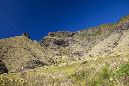 view up towards the tallest cliff in Europe Faneque from El Risco, field of crimson fountaingrass, invasive specias, on the foreground Stock Photo