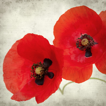 textured old paper background with ref field poppy