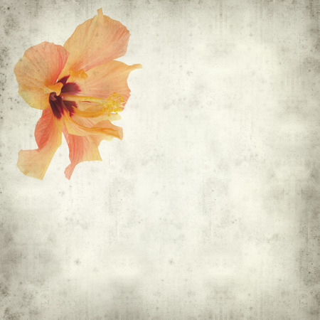 textured old paper background with light orange hibiscus flower  Фото со стока