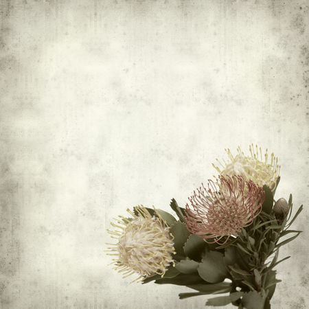 textured old paper background with exotic protea flowers