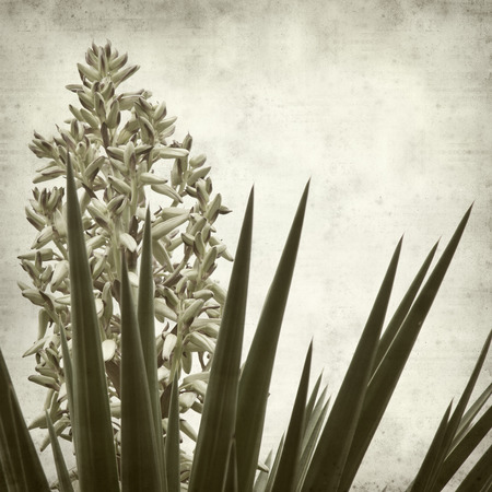 textured old paper background with Yucca opening inflorescence