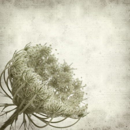 textured old paper background with wild carrot flowers 스톡 콘텐츠 - 105730210