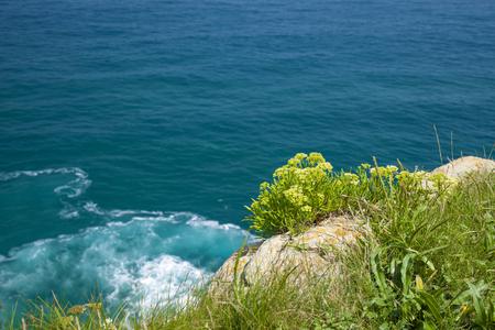 Cantabria, coastal landscape around between Santander and Maruca, rock samphire growing