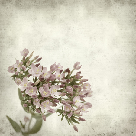 textured old paper background with pink flowers