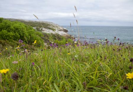 Cantabria, coastal landscape around Isla Virgen de Mar with summer flowers Фото со стока