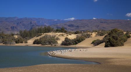 Charca de Maspalomas, Maspalomas lagoon, important natural environment, especially suitable for birds Stock Photo