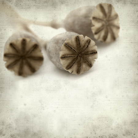 textured old paper background with dry seed pods of breadseed poppy Stock Photo
