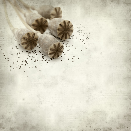 textured old paper background with dry seed pods of breadseed poppy Imagens - 110010799