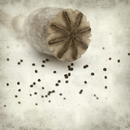 textured old paper background with dry seed pods of breadseed poppy Stock fotó