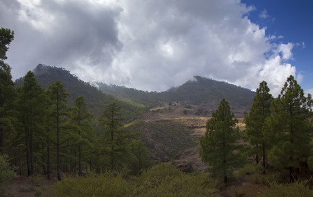 Gran Canaria, October, nature park Pajonales, canarian pines
