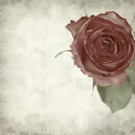 textured old paper background with pink rose