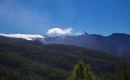 Gran Canaria,  nature park pine forest Tamadaba, reforested areas 版權商用圖片