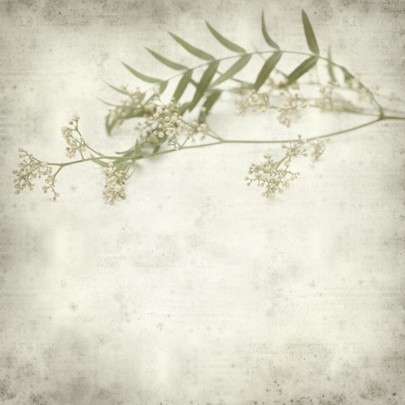 textured old paper background with small white flowers of pink peppercorn tree